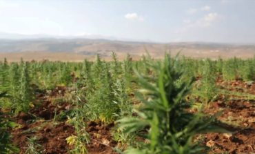 Lebanon to consider legalizing cannabis growing