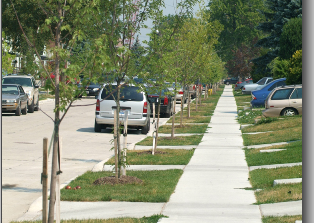 Dearborn warns about the removal of trees without city approval