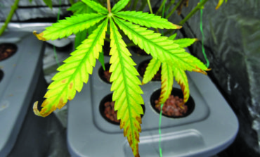 Arab Americans share views on recreational marijuana legalization