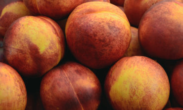 Fresh fruit recalled for possible Listeria
