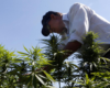 Lebanon legalizes cannabis farming for medicinal use in bid to help ailing economy