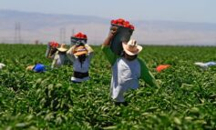 Undocumented workers remain vital part of the economy, yet lose out on COVID-19 protections