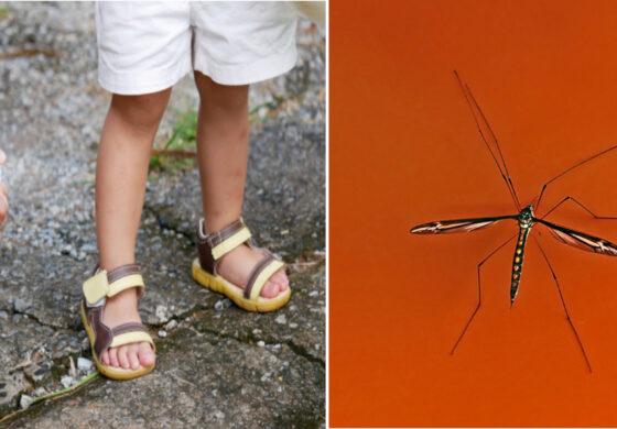 Michigan completes aerial treatment to combat mosquito-borne illness