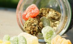 Experts warn parents about dangers of accidental THC-edibles use in children